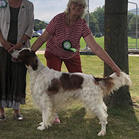 dog being shown